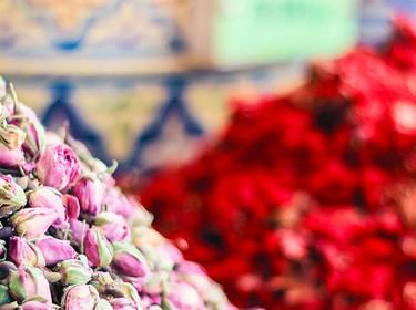 ciliegio fiori sito di incontri internazionali storie di dating andato storto