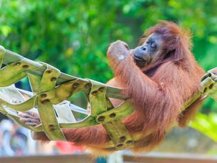 Viaje a Sumatra